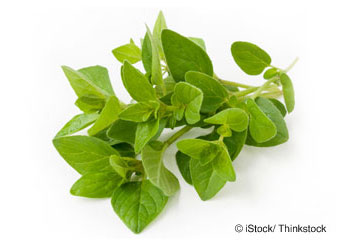 What Is Oregano Good For?